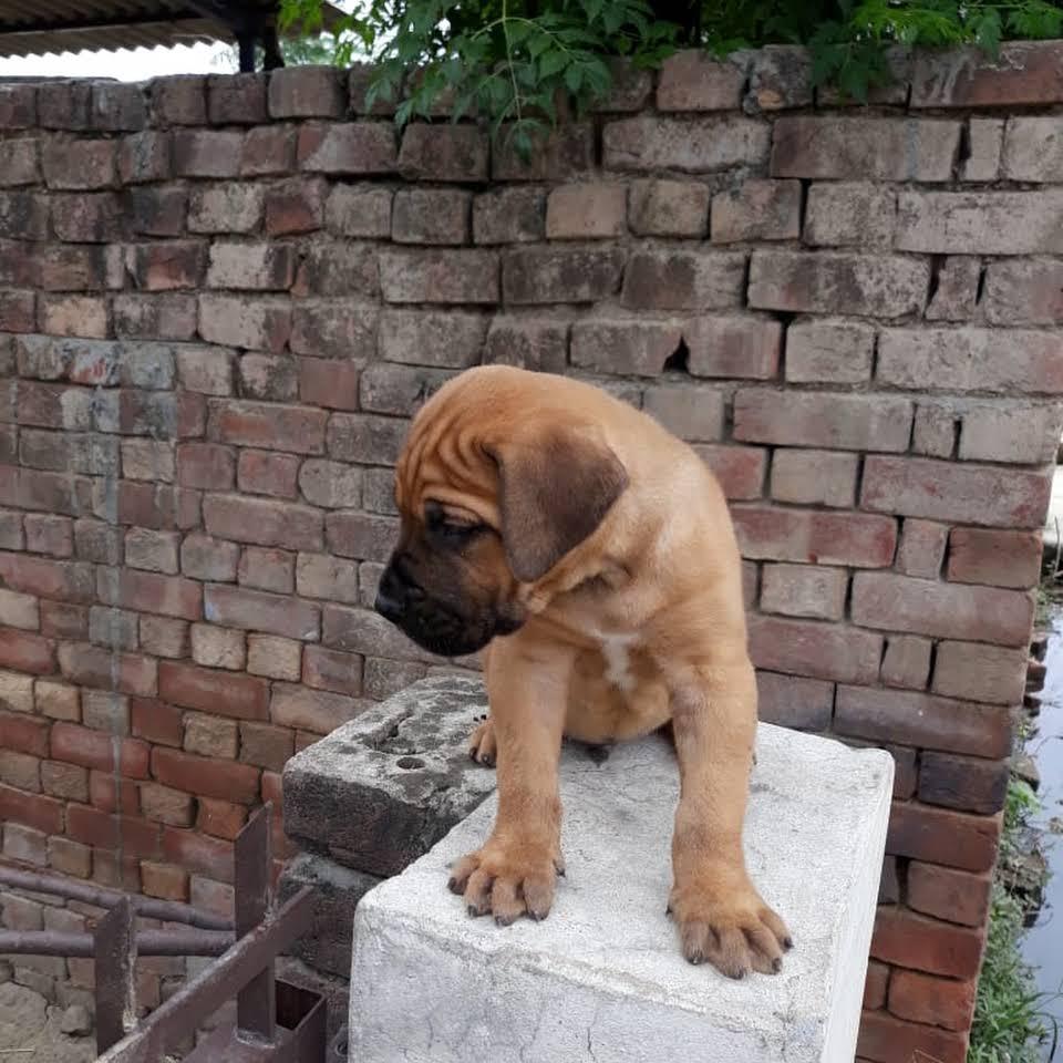 Simran Pet Lover Faridabad
